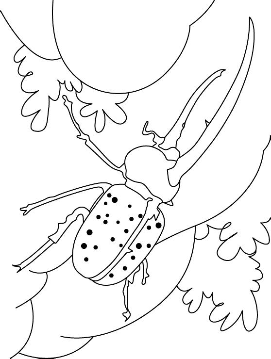 Жук похож на носорога Раскраски Раскраски жуки