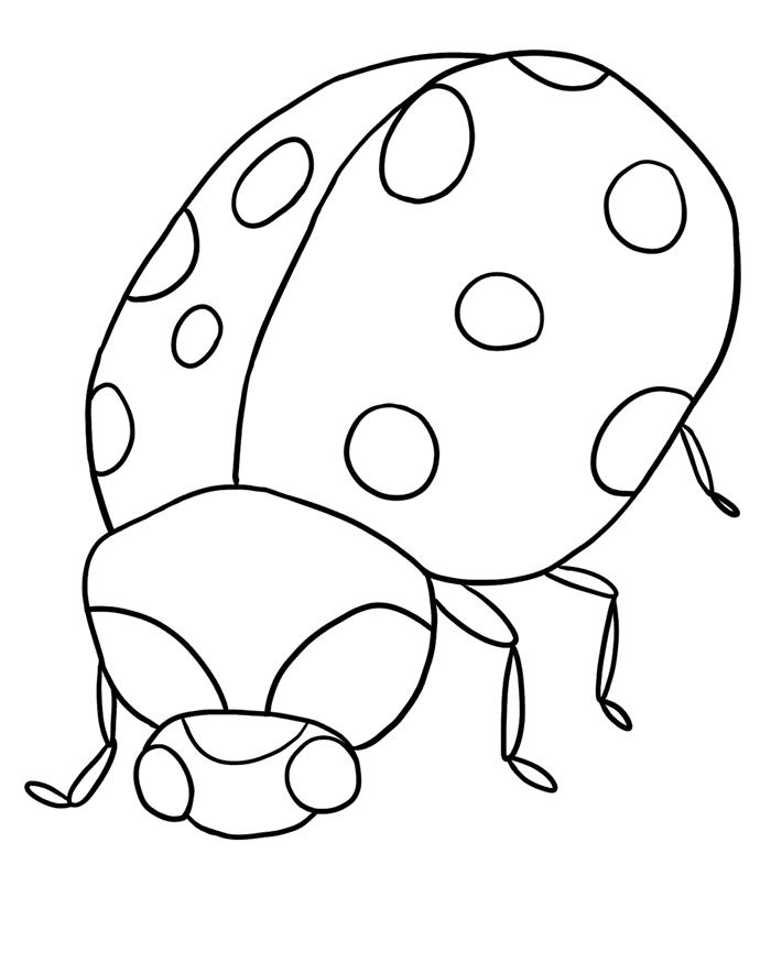 У Божьей коровки красивая спинка Раскраски Раскраски жуки