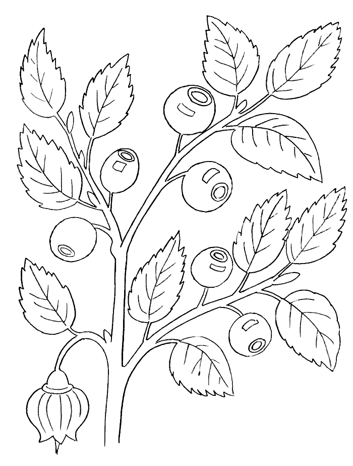 Ягоды лесные раскраска