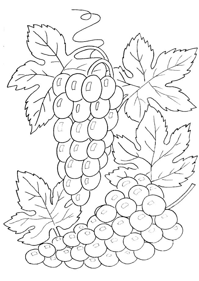Виноград Раскраски Раскраски ягоды
