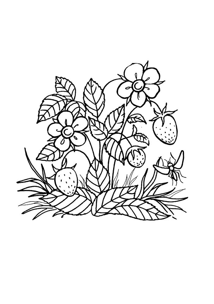 Лесная земляника Раскраски Раскраски ягоды