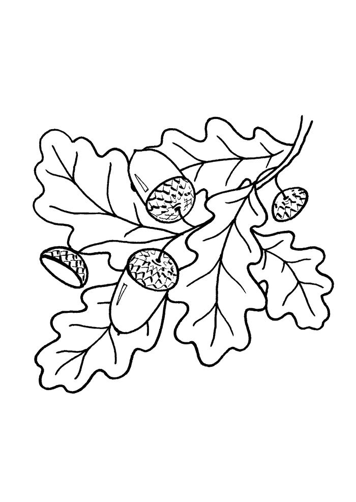 Желуди и листья дуба.