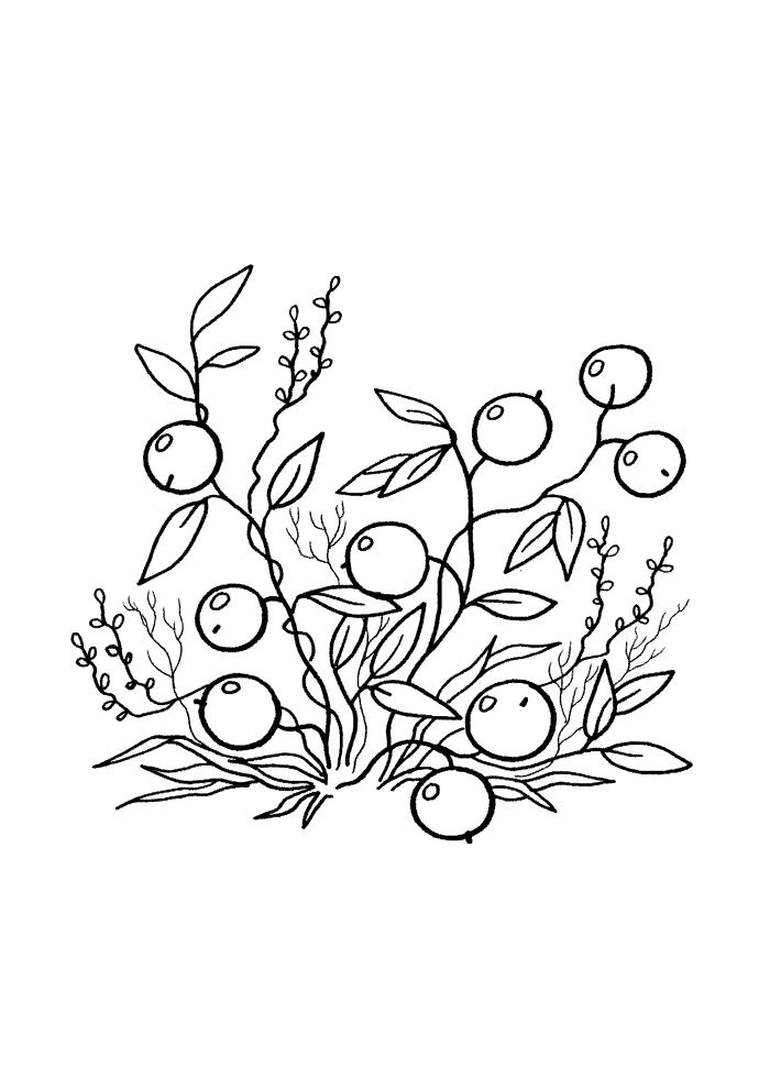 Клюква Раскраски Раскраски ягоды