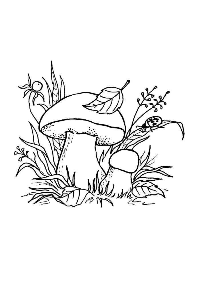 картинка гриб раскраска для детей