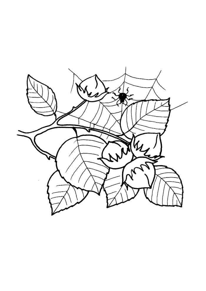 орешник листья фото