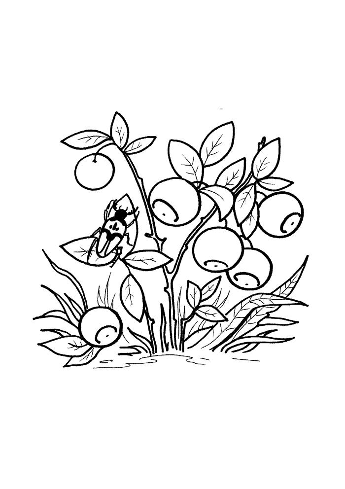 Черника Раскраски Раскраски ягоды
