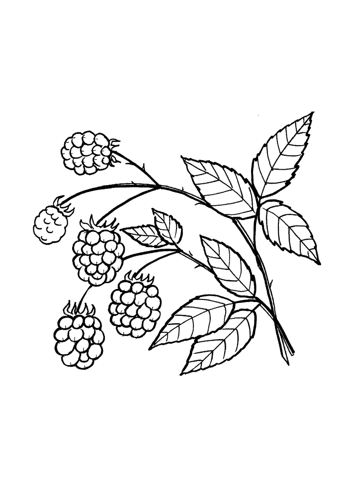 Лесная малина Раскраски Раскраски ягоды