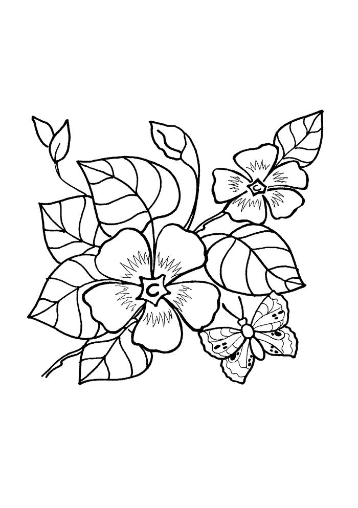 Лесная фиалка Раскраски Раскраски цветы