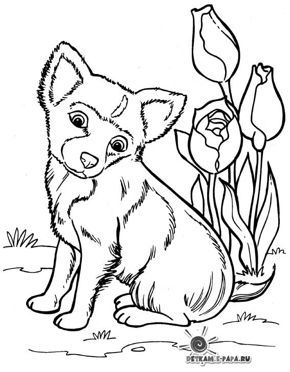 free wolf puppy coloring pages - photo#13