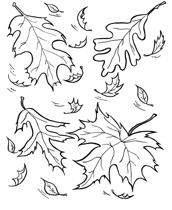 Картинка раскраска листопад для детей