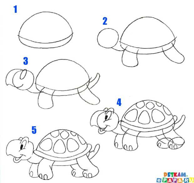 Нарисовать черепаху поэтапно - 04268