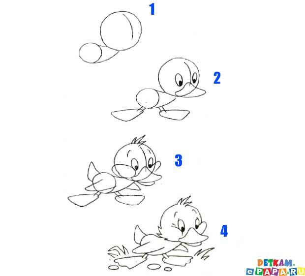 это оказалось совсем не сложно! схемам поэтапного рисования карандашом.  Благодаря.